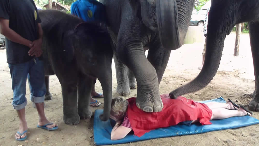 Would you be brave enough to try an elephant massage